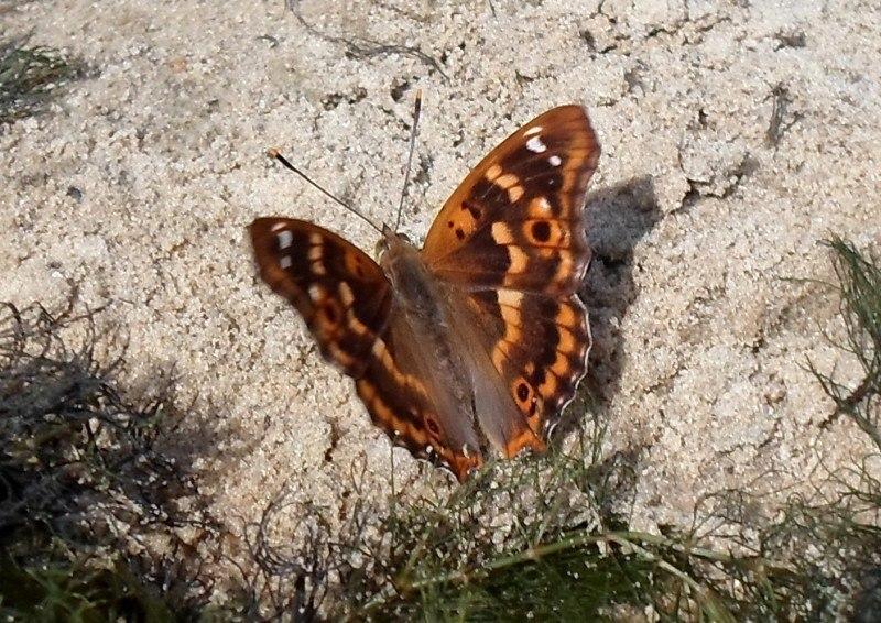 Бабочка на пляже)