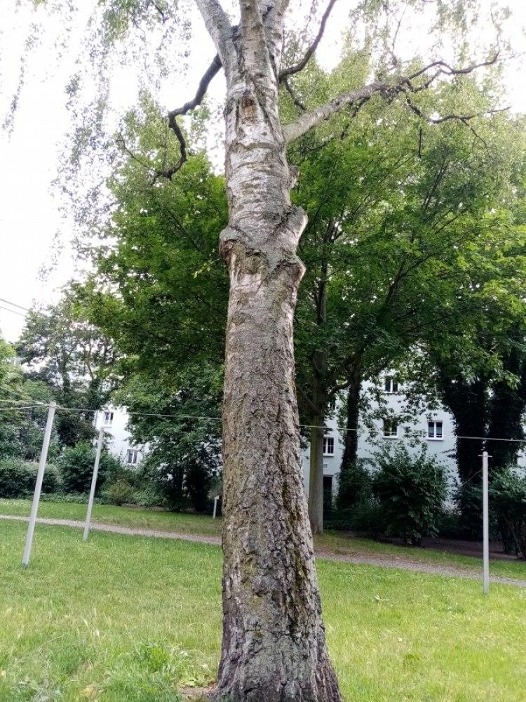 Ствол дерева.