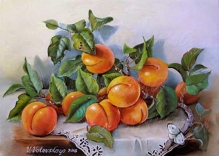 Веточка абрикосов