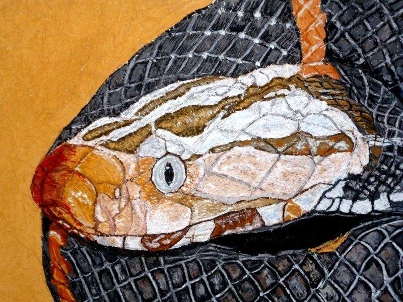 Китайская гадюка (Azemiops feae)