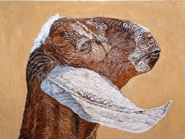 Нубийская коза