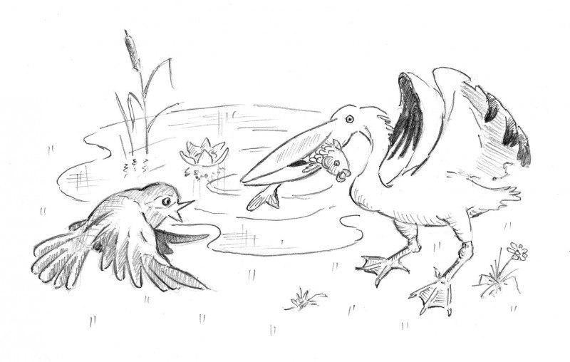 ЛТД пеликана с точки зрения воробья