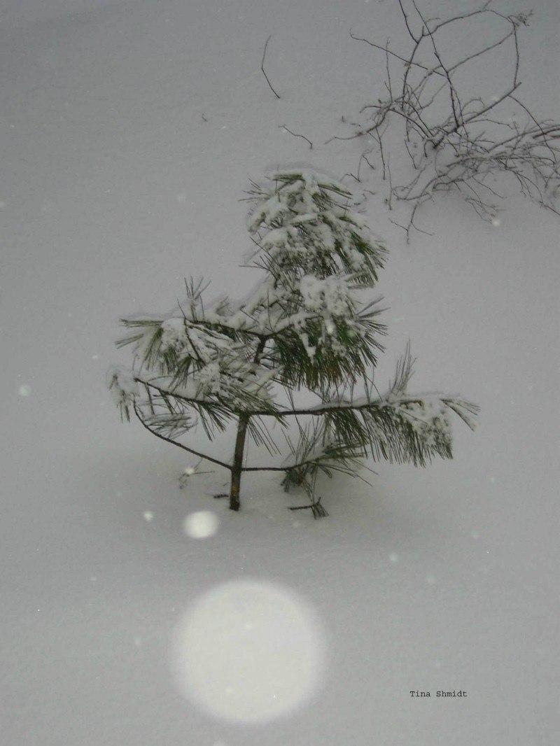 Елочка последний снег