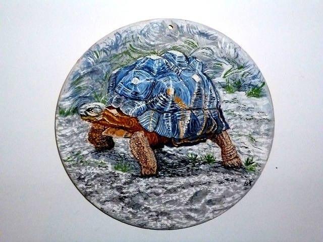 Звёздчатая черепаха (лат. Geochelone elegans) — вид сухопутн