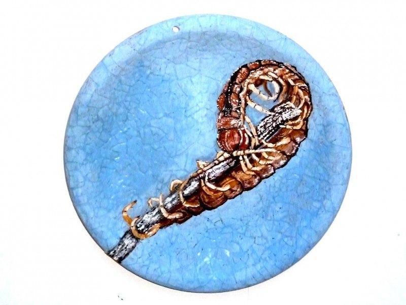 Сколопе́ндры (лат. Scolopendra) — род губоногих многоножек