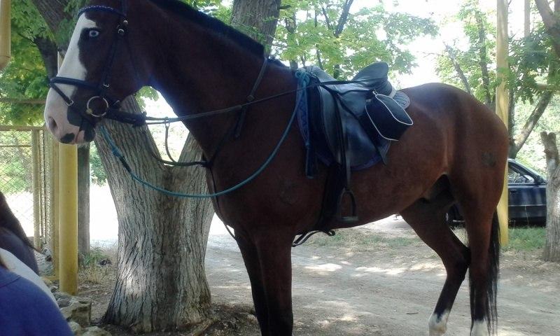 Лошадь в городе