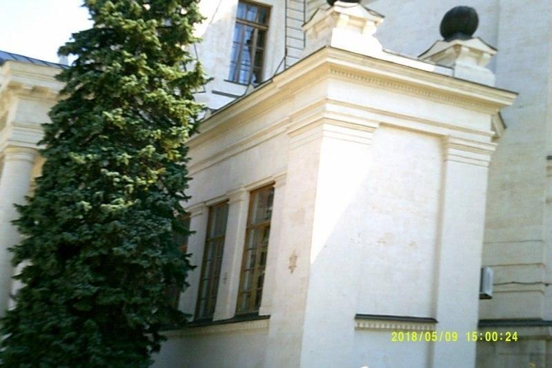 Дерево рядом с Ливадийским дворцом