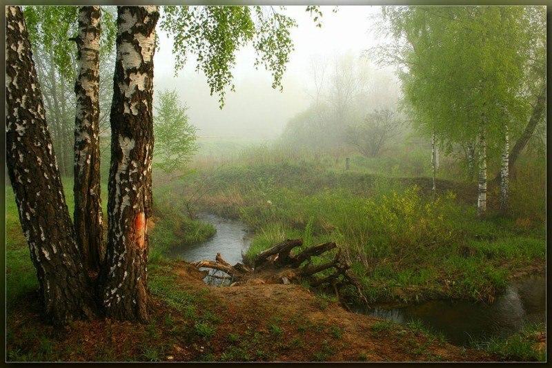 У лесного ручья ....
