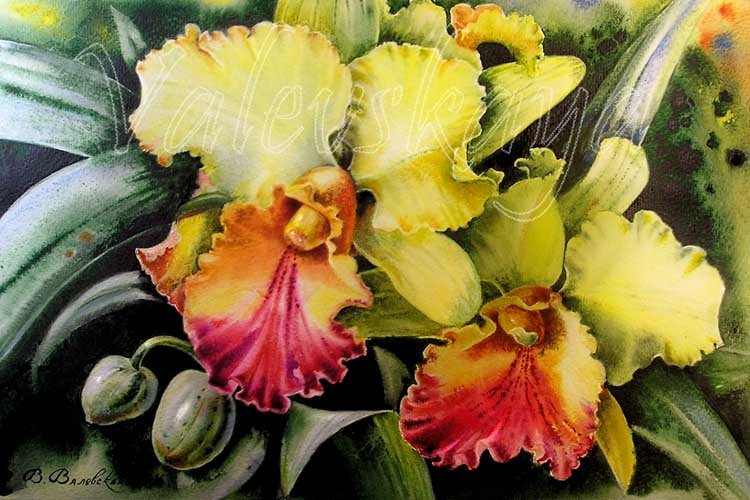 Акварельные орхидеи