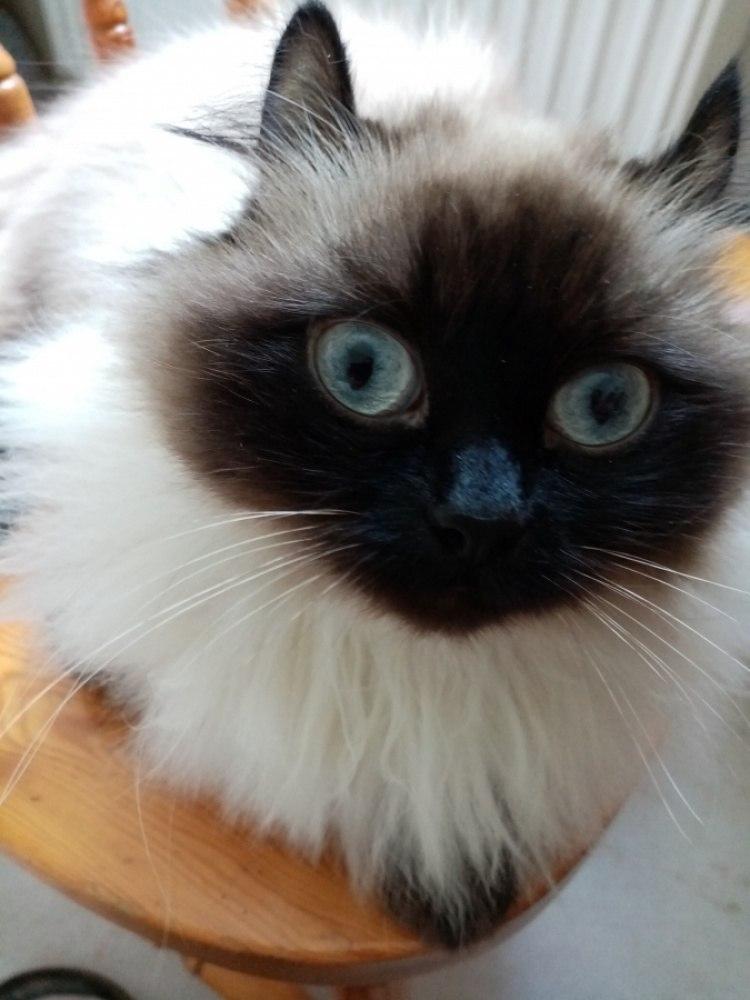 Кошка на столике..