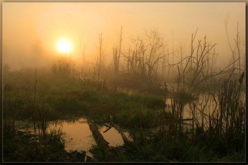 Мир тумана ......