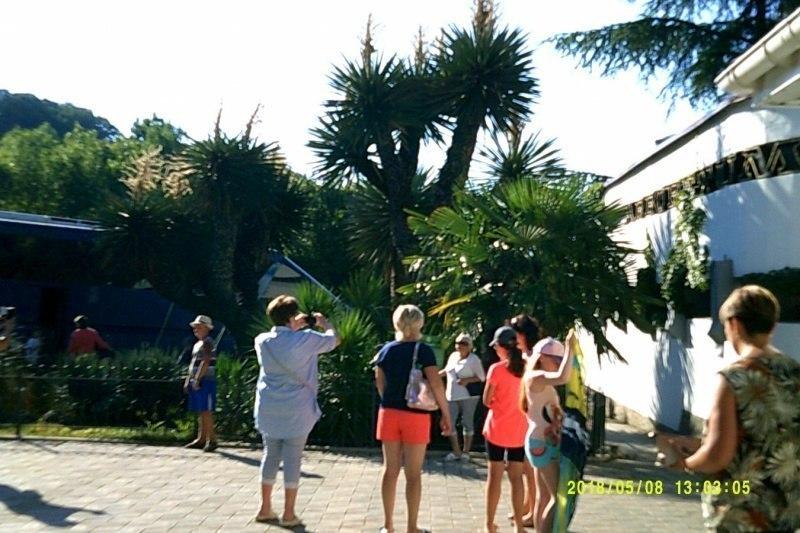 Люди фотографируют дерево