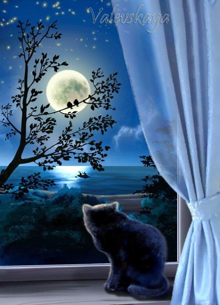 Лунные мечты