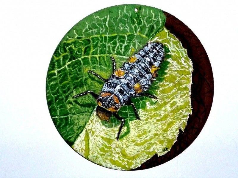 Личинка Божьи коровки (лат. Coccinellidae) — семейство жу