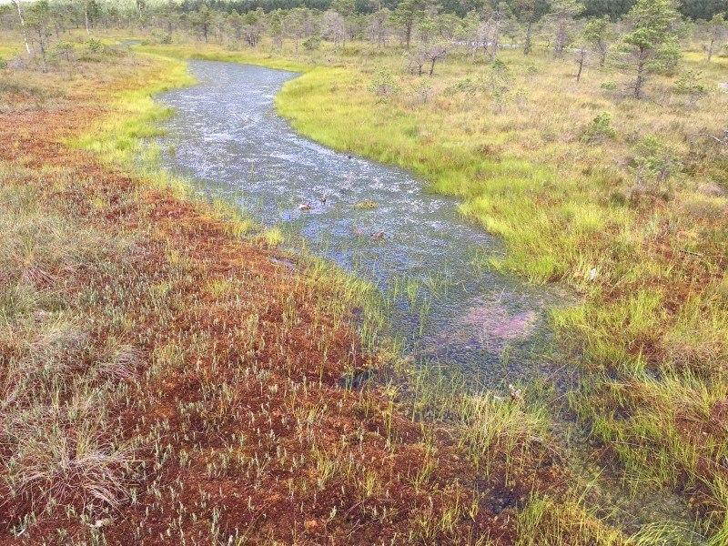 Большое болото в Кемери