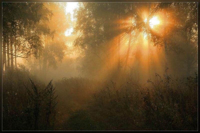 Мир тумана ..