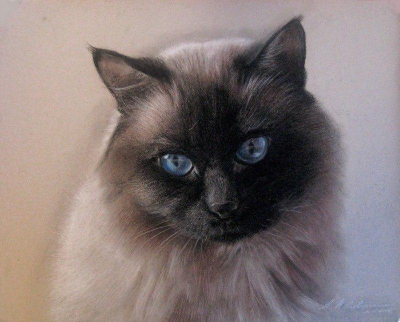 Портрет моей кошки Аши