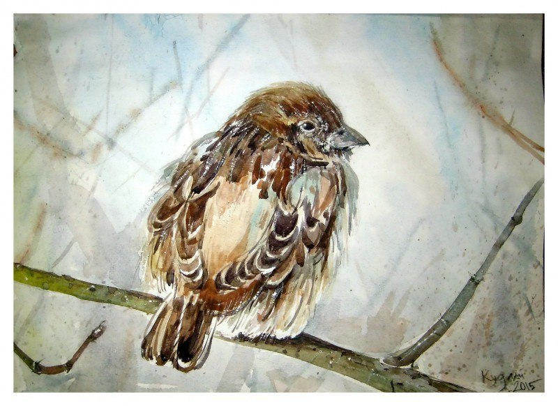 Горобець _sparrow