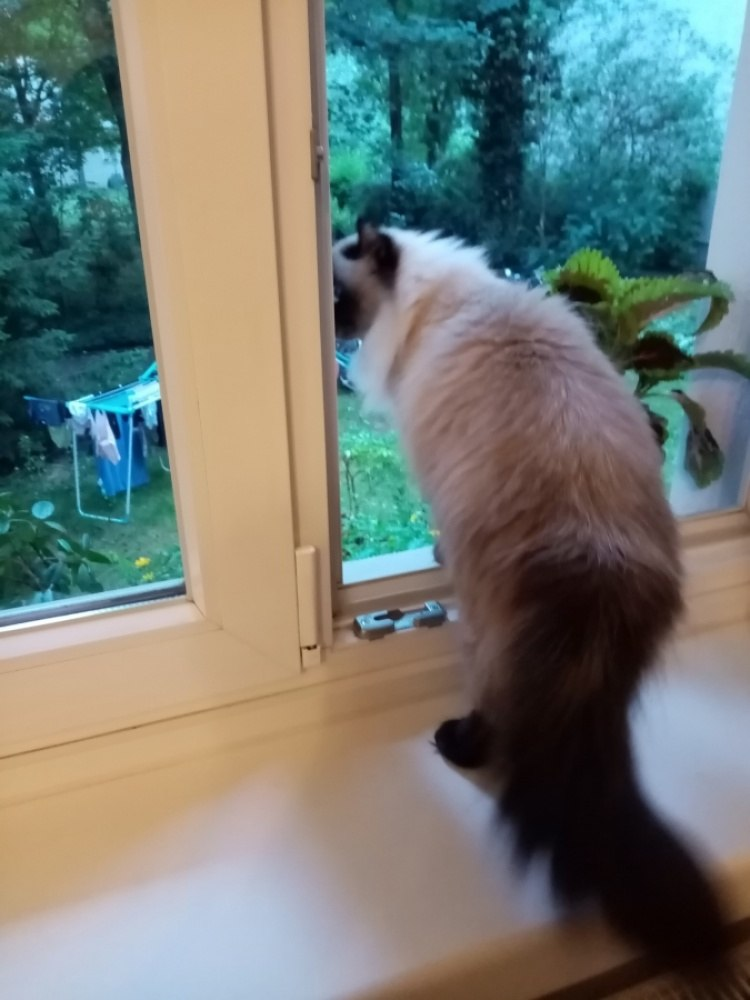 Кошка смотрит на двор.
