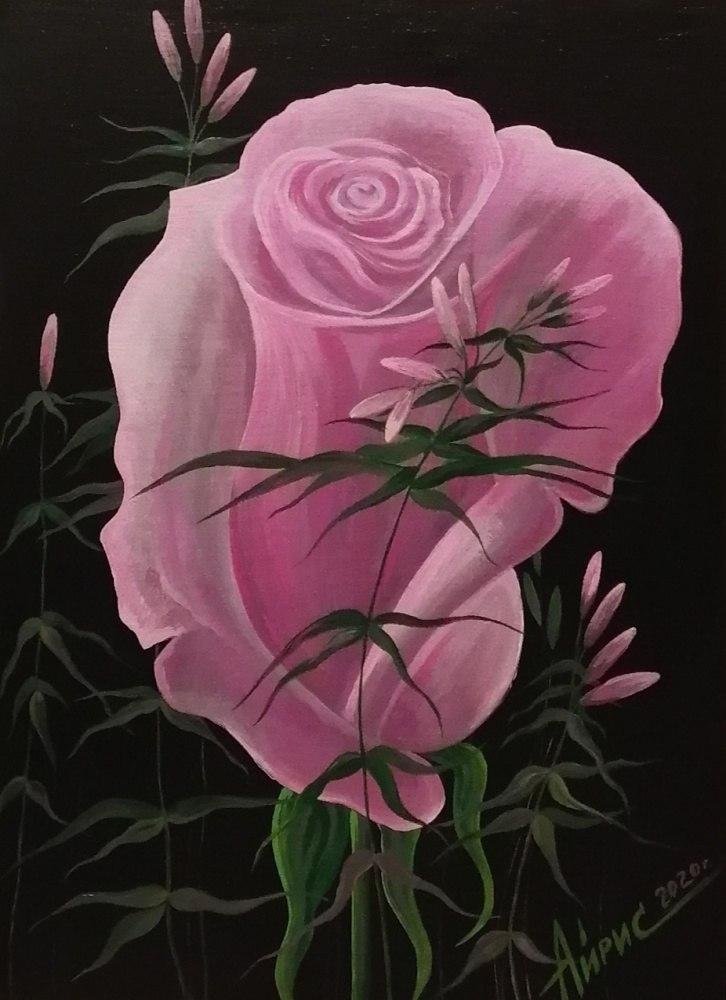 Розовая роза на чёрном фоне