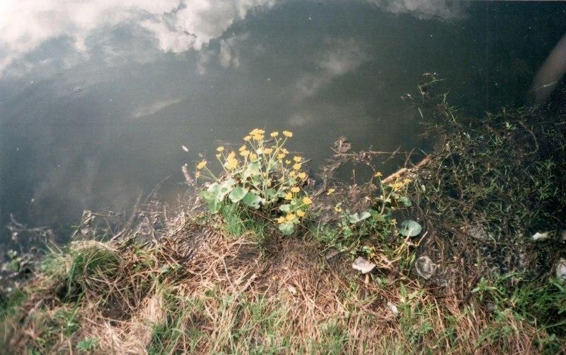 Цветы возле воды