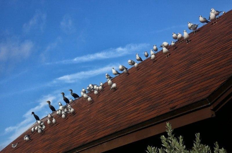 Правильная сторона крыши