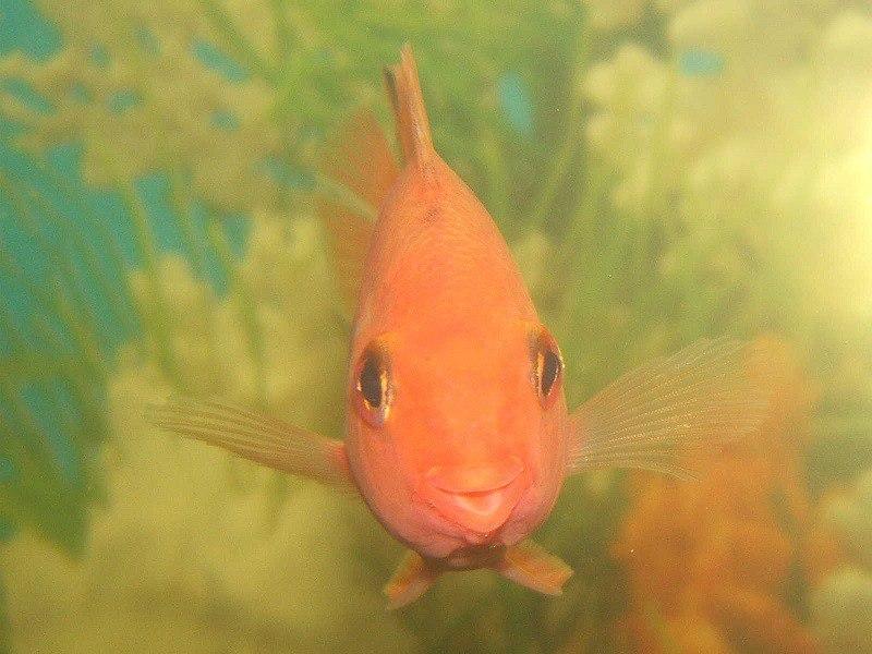 Улыбка  рыбки