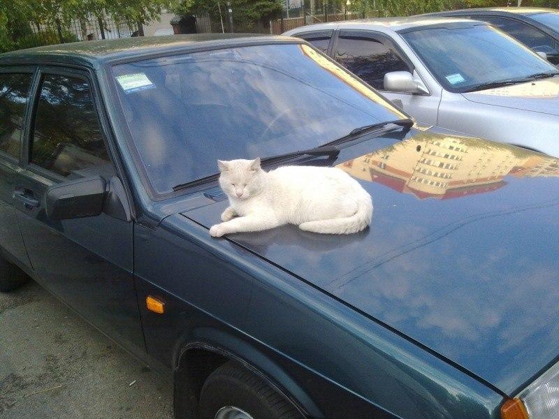 Если кот - хозяин улицы, то ему не страшны осенние холода